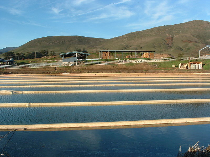 The Anaerobic Lagoon at the Cal Poly Dairy 25KW Power Plant to the Right Using the Biogas Created